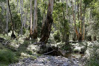 The bush - The Australian bush