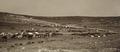 Australian camps on slopes of Olivet & Mount Scopus3.tif