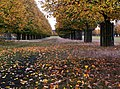Autumn, Bushy Park. - panoramio.jpg