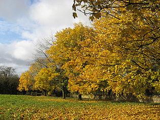 AutumnIn Oakridge.jpg