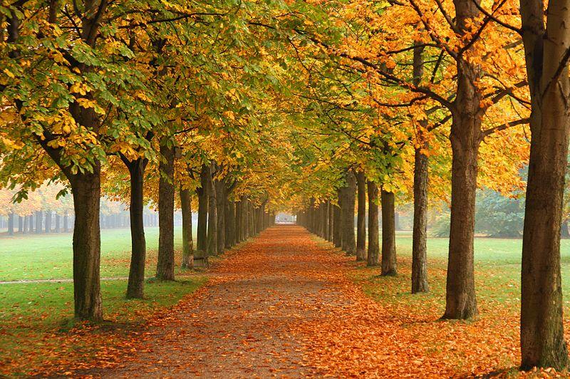 File:Autumn in Dresden.jpg