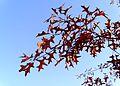 Autumn leaves .JPG