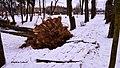 Błażowa - park - panoramio.jpg