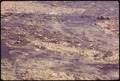 BEADS OF SOLIDIFIED POLLUTION IN THE LAKE WHICH SURROUNDS THE EASTMAN KODAK PLANT - NARA - 546202.tif