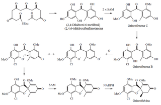 Griseofulvin biosynthesis