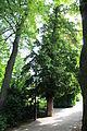 Baden-Rosarium 9425.JPG