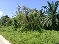 Bagan, 83000, Johor, Malaysia - panoramio (11).jpg