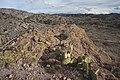 Baker Canyon WSA (9505492030).jpg
