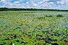 Bakken's Pond.jpg