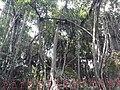 Bakreswar Temples and Hot spring 21.jpg
