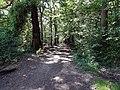 Balade en Forêt de Verrières le 20 août 2017 - 001.jpg