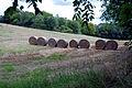 Bales of hay (1295560962).jpg