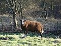 Balwen Sheep - geograph.org.uk - 682044.jpg