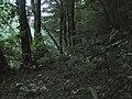 Banat, Nera Canyon - panoramio (18).jpg