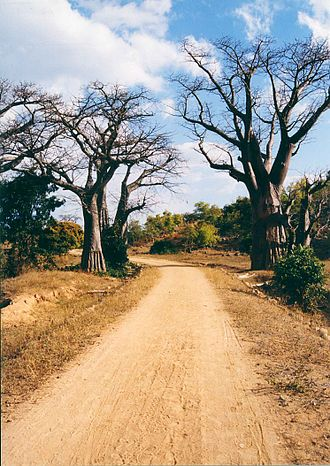 Transport in Malawi - An unpaved country road in Malawi