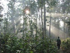 Bardia forest.jpg