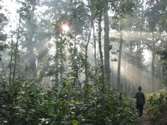 Bardiya National Park - Forest in Bardiya National Park