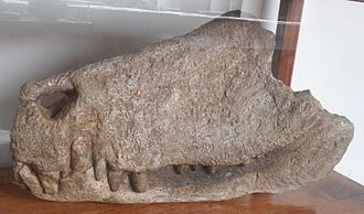 2007 in paleontology - Barinasuchus.