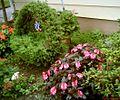Basket shaped bush.jpg