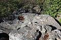Bauchman Rocks - panoramio (6).jpg