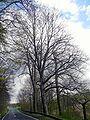 Baumgruppe bei Nickersfelden, 1.jpg
