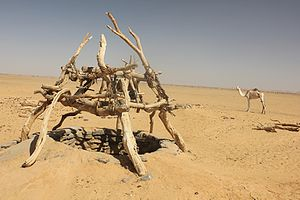 Bayuda Desert - Desert well used by Bisharin nomadic pastoralists
