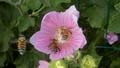 Bees and Flowers 02.png