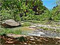 Bend in the River, Zion NP, Riverside Walk 5-1-14zm (14502186043).jpg