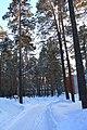 Berdsk, Novosibirsk Oblast, Russia - panoramio (16).jpg
