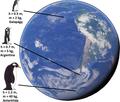 Bergmanns rule, pinguins.png