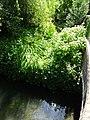 Berguette le ruisseau Guarbecque (1).jpg