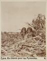 Bild från familjen von Hallwyls resa genom Egypten och Sudan, 5 november 1900 – 29 mars 1901 - Hallwylska museet - 91576.tif