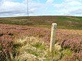 Bilsdale Mast from the South of Fangdale Beck - geograph.org.uk - 79610.jpg