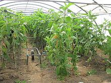 Ackerbau. Grundlagen der Pflanzenproduktion.