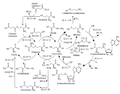 Biosíntesis y metabolismo de la metionina.png