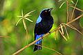 Bird-ave.jpg