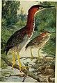 Bird lore (1913) (14745862421).jpg