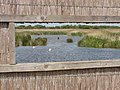 Bird viewing hide and Otmoor reedbed - geograph.org.uk - 182156.jpg