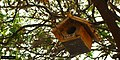 Birdhouse Japon (155539171).jpeg