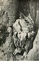 Birds of the Bible (1909) (14563583630).jpg