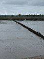 Black-headed gulls feed by breakwater - geograph.org.uk - 807712.jpg