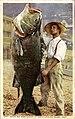 Black Sea Bass caught at Santa Catalina Island (NBY 3008).jpg