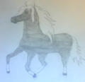 Black and white horse.png