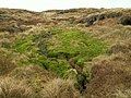 Blanket Bog Crowden Meadows - geograph.org.uk - 365731.jpg
