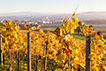 Blick vom Ottenberg auf Weinfelden und den Alpstein.jpg