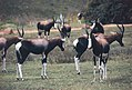 Bontebok Park - Swellendam - Overberg, South Africa (3918547125).jpg