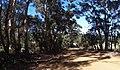 Bornholm WA Road - Mapillary (EGxTfQu5fYi9Q4 YkwuSTw).jpg