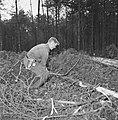 Bosbewerking, arbeiders, boomstammen, gereedschappen, Bestanddeelnr 251-9135.jpg