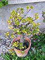 Botanični vrt (3990922018).jpg