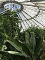 Botanisk have - panoramio (5).jpg